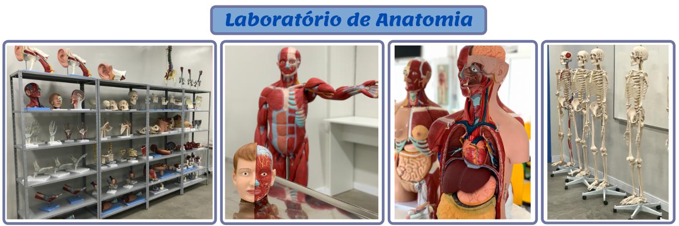Lab Anatomia