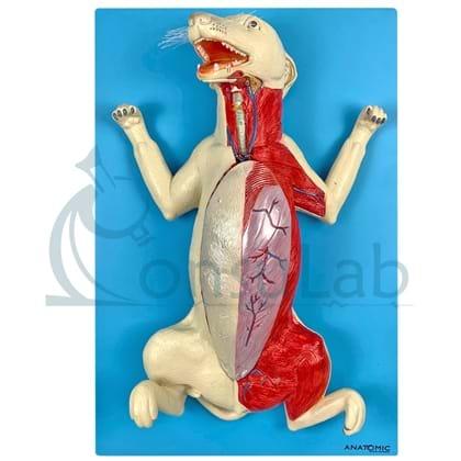 Anatomia do Cachorro em Placa