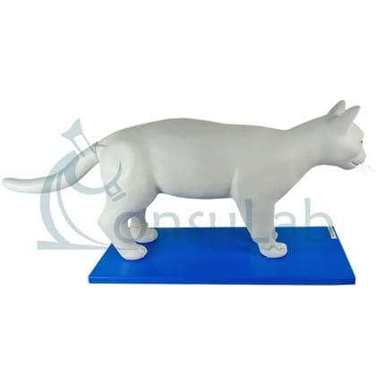 Anatomia do Gato em 11 partes