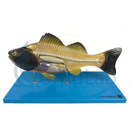 Anatomia do Peixe
