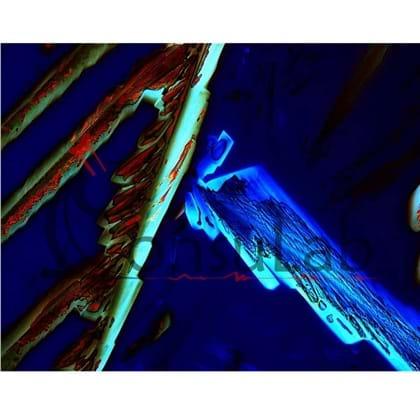 Câmera Digital Refrigerada CCD 5.0MP com Software (especial para trabalhos com fluorescência e campo