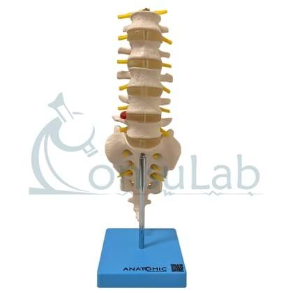 Coluna Vertebral Lombar