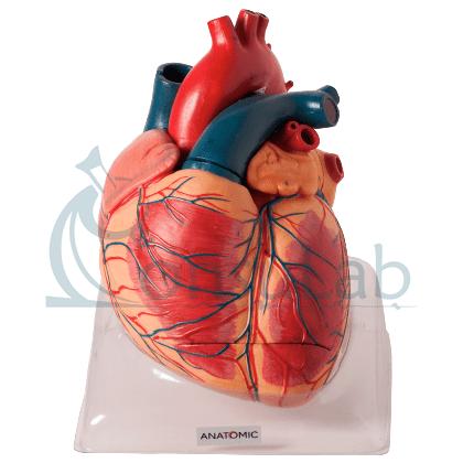 Coração Ampliado Luxo, em 3 Partes