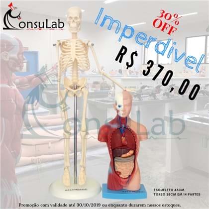 Esqueleto 45cm + Torso 28cm com 14 Partes