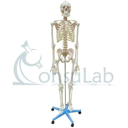 Esqueleto de aprox. 168 cm com Coluna Flexível, Suporte e Base com Rodas