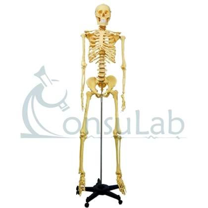 Esqueleto Padrão Aproximadamente 170cm com Suporte e Rodas Amarelo