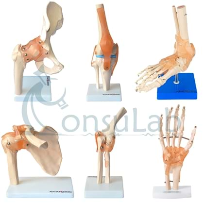Kit Articulações do Corpo Humano