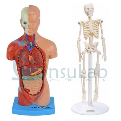 Kit Infantil de Anatomia - Torso 28cm e esqueleto 20cm