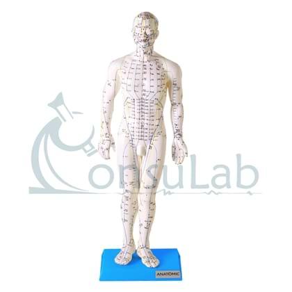 Modelo de Acupuntura Masculino de 50 cm