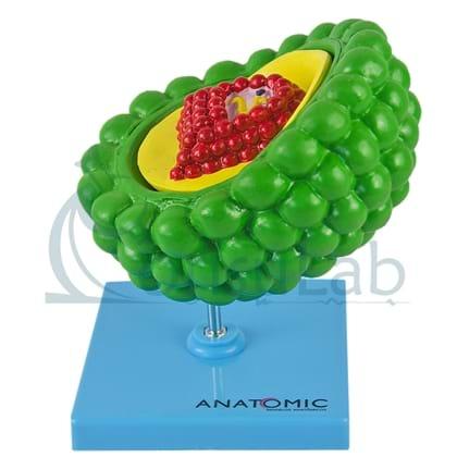 Modelo de Vírus HIV