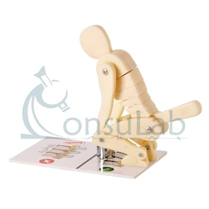 Modelo Funcional de Postura