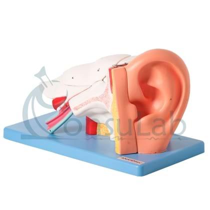 Ouvido Ampliado e Numerado, em 6 Partes
