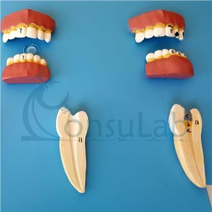 Patologia Dentária 12 Partes
