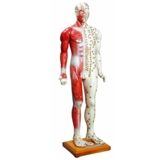 Modelo Masculino Acupuntura de 85 cm