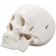 Crânio com 3 Partes