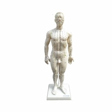 Modelo Masculino Acupuntura de 50 cm