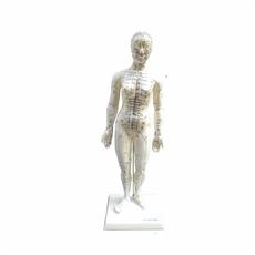 Modelo Feminino Acupuntura de 50 cm