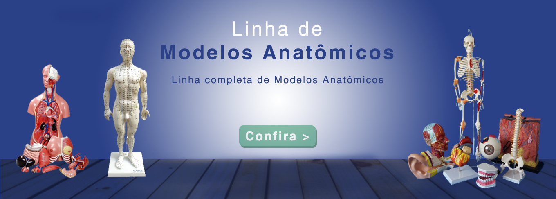 LabTemp - Modelos Anatomicos
