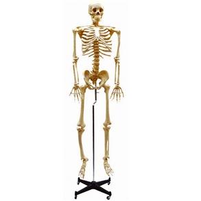 Esqueleto com Coluna Flexível e 168cm de Altura com Suporte.