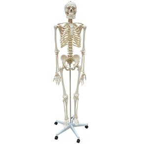 Esqueleto Padrão 170 cm com Suporte e Base com Rodas.