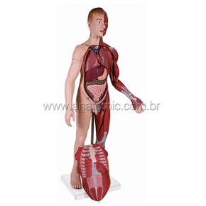 Modelo Muscular Masculino com Órgãos Internos com 170 cm