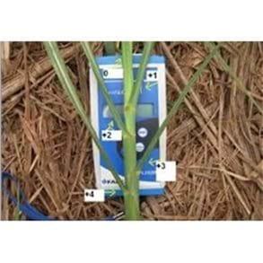 Clorofilômetro Digital
